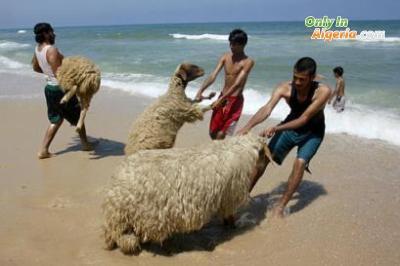 photo drole en algerie